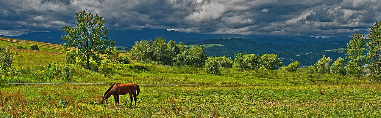 reiki-animalier-cheval-3